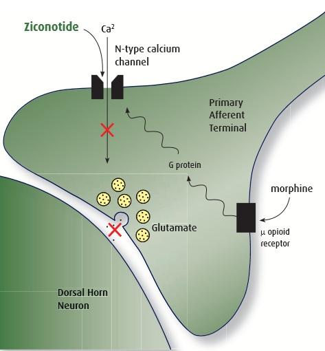 azlink-5-art-21-ziconotide-2