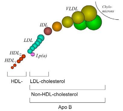 Lipoproteïnen van verschillende grootte en densiteit gescheiden na ultracentrifugatie